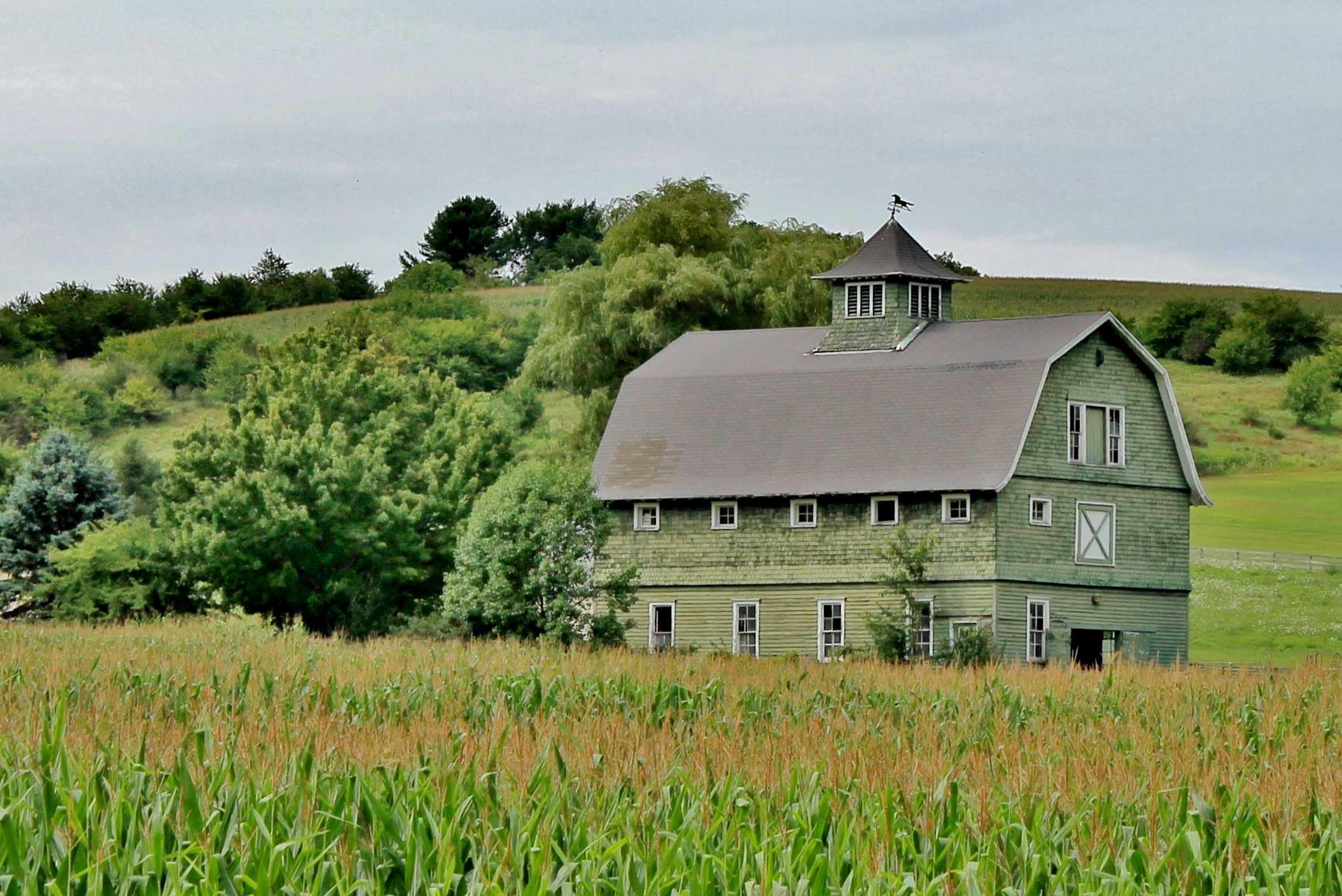 Love green barn on a green landscape
