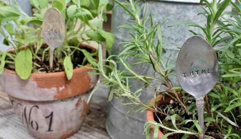 Vintage spoon stamped thyme in plant