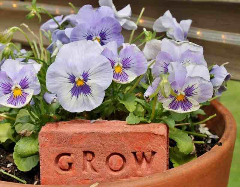 Cement Word Block: Grow