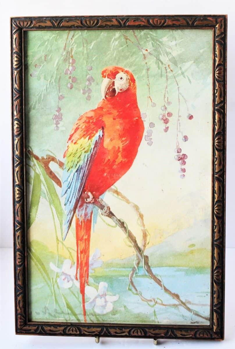 Vintage Parrot Print