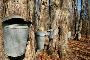 Nearby farms offer maple syrup demonstrations in March.