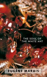 The Soul of the White Ant 500h