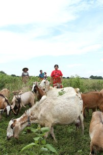 Sri kambing - Aditya Wardhana (9)