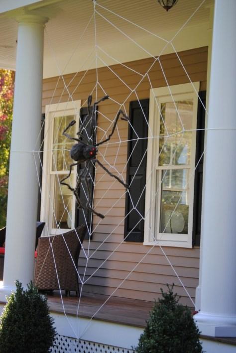 Tangled Spider Web
