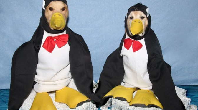 Penguins Halloween Costume For Dogs