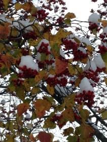 """""""Snow-capped"""" (c)Gracie K. Harold 2014"""