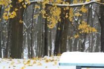 Winter Play (c)Gracie K Harold 2014