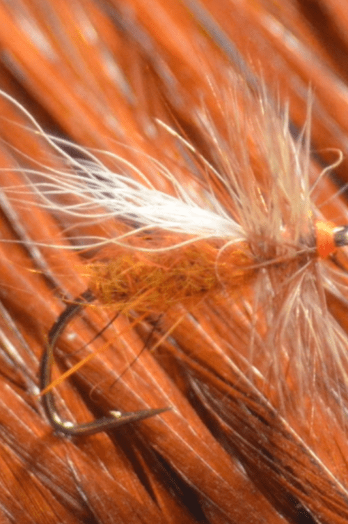 ausable_caddis