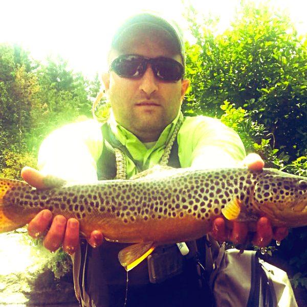 brown_trout_ausable
