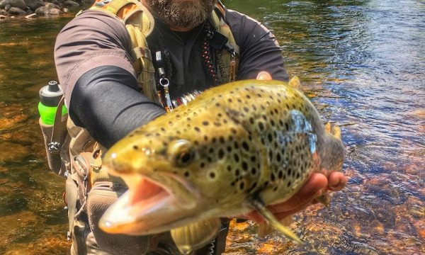 Trout-Brown-Fly-Fishing-Adirondack-New-York-NY-2