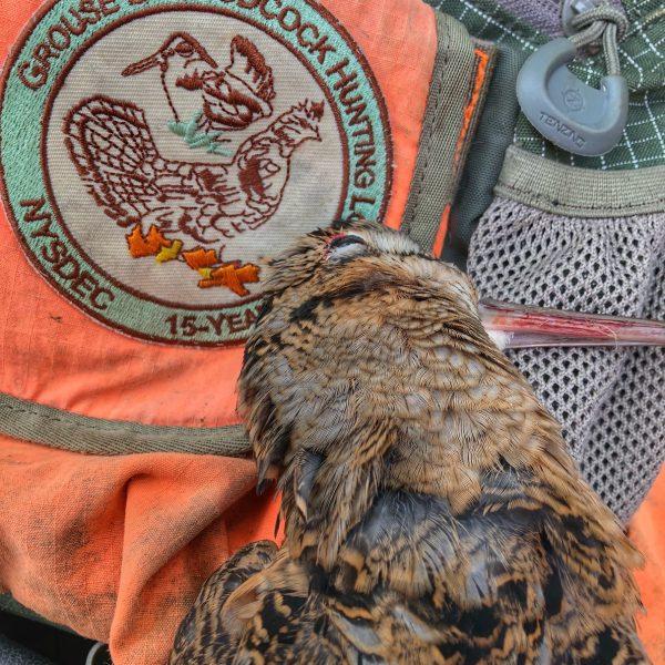 new york woodcock hunting