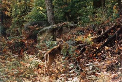 autumn whitetailtn