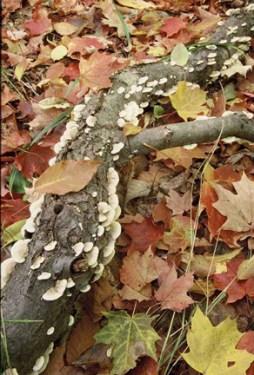 forest floortn