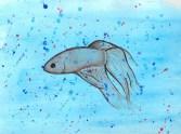 Betta Fish on Watercolour