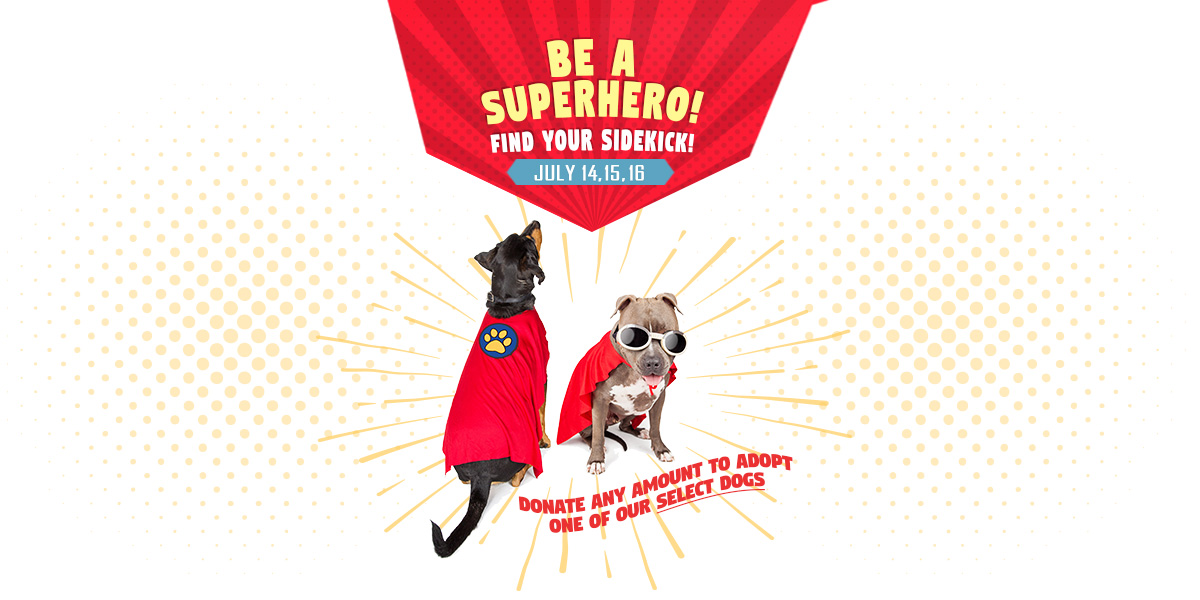 Be a Superhero! Find your sidekick! - Adoption Special