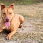 Adopt Osito - ADL dogs