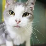 Adopt Nala - Senior Cat