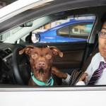 North Park Subaru Pet Star - Beanie