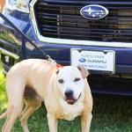 North Park Subaru Pet Star - Imogen