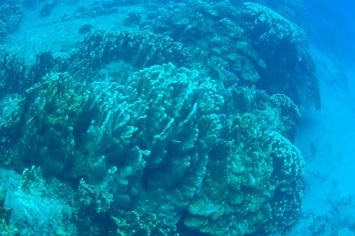 Buceo en Isla de Pascua – Atariki Diving Center