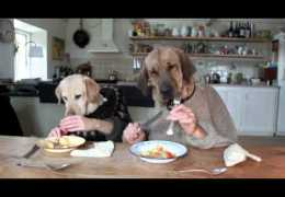 Two dogs dinning