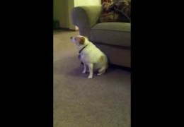 Dog Dancing To Eminem Shake That Ass For Me