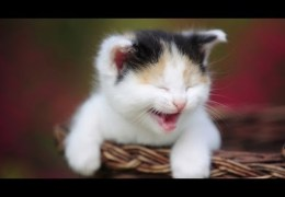 Funny cat vines – Ultimate cats vines compilation 2014