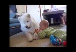 Dogs Best Nannies for Kids Compilation November 2013