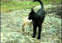 Cat and owl playing – Fum & Gebra – Perfect friendship!