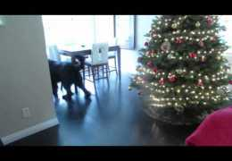 Little girl plays hide and seek with giant dog