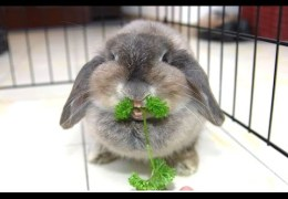 Funny And Cute Bunny Rabbit Videos Compilation 2014