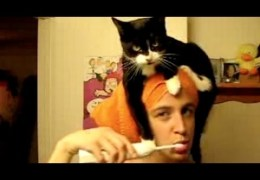 Funny cats annoying owners – Cute cat compilation