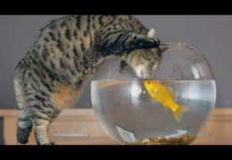 Funny cats vs fish tanks – Cute cat compilation