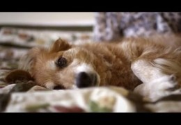 Dogs Can Smell Cancer – Secret Life of Dogs – BBC
