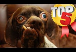 World's UGLIEST Dogs (Top 5!!)
