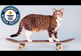 Most tricks by a cat in one minute