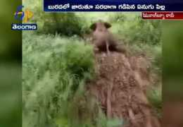 Baby elephant Busy' Day to Enjoy itself – by Sliding Down a mud slope | China