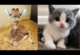 Cute baby animals Videos