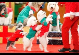 THE MOST TALENTED DOGS IN THE WORLD!! | America's Got Talent Holiday Show 2016