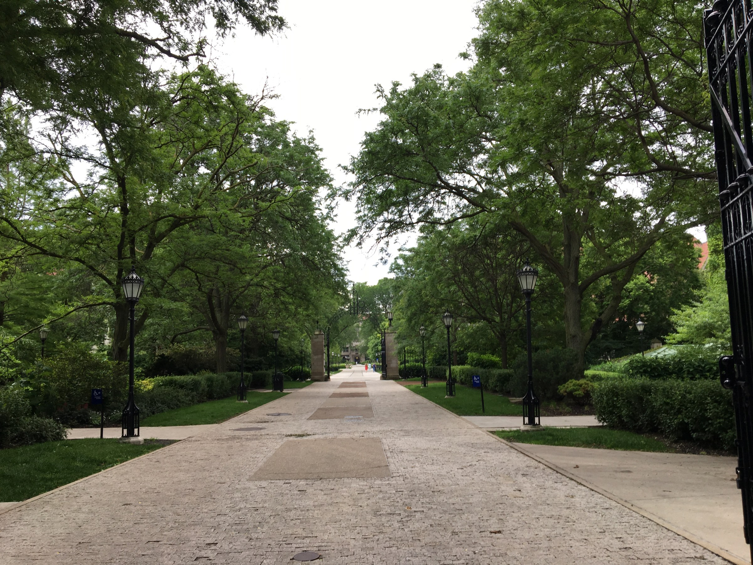 Paved walkway surrounded by trees