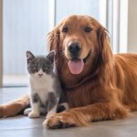 STJ decide que condomínios não podem proibir animais de estimação