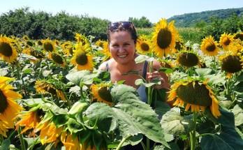 De ce aș vrea să fiu ca floarea soarelui