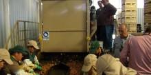 Productores de frutos secos