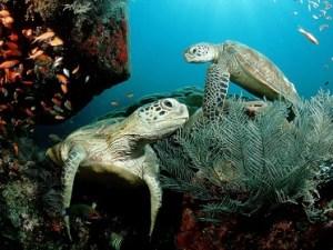 tortugas-marinas-foro-ambiental1