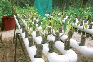 sistema-cultivo