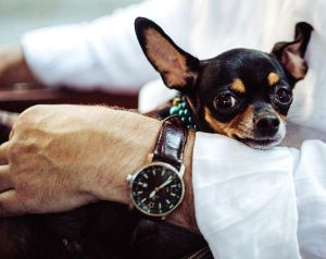 giardias-en-perros