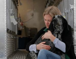 perros rescatados sur corea