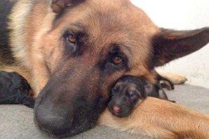 dia de padre perro