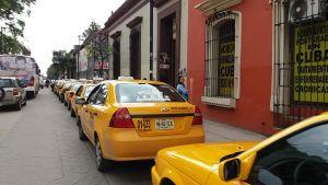 taxistas amarillos