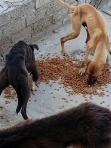 perros xoxo